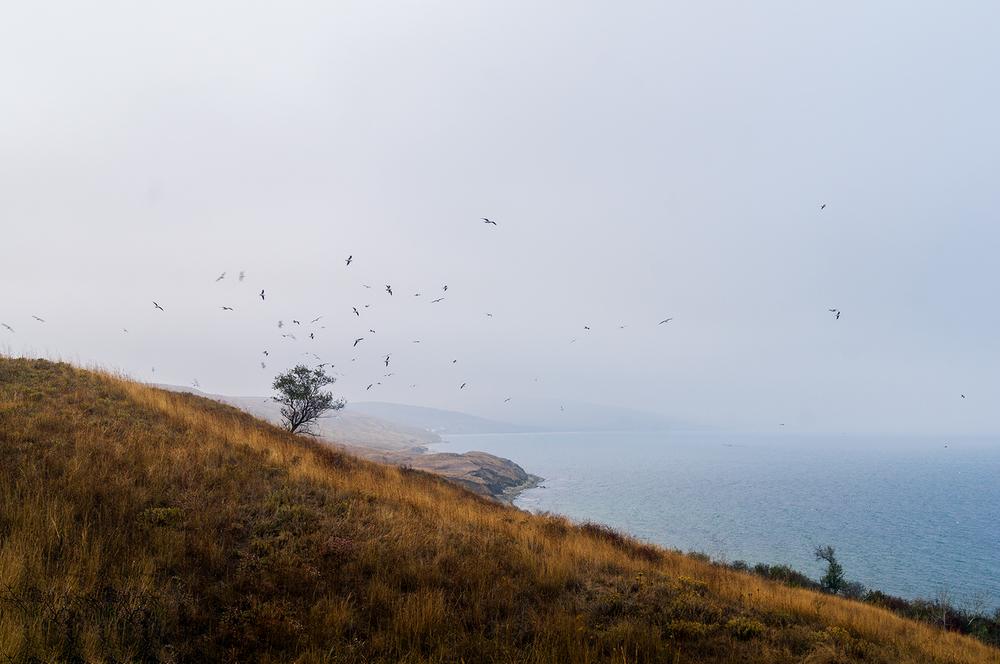 Юркино-чайки1.jpg