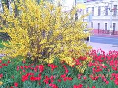 площадь Ленина-3.jpg
