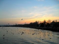 птицы-5.jpg